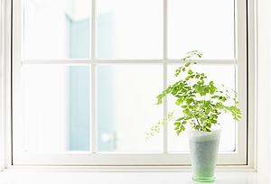 観葉植物が置かれた出窓の写真