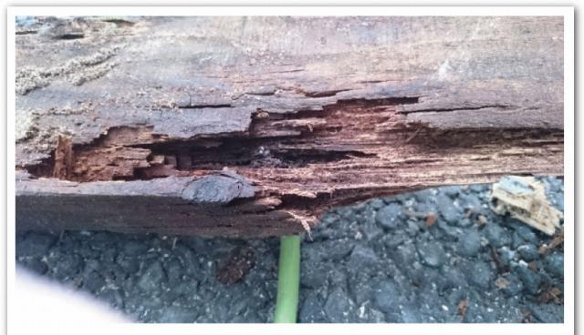 木材腐食2